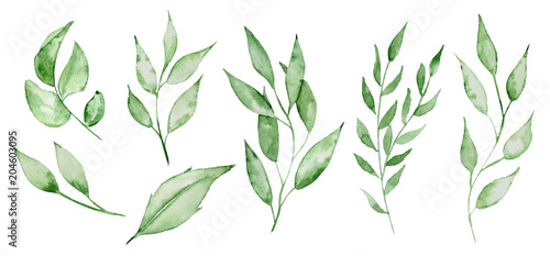 Wall mural Watercolor green leaves and brunches Greenery herb hand rawn illustration