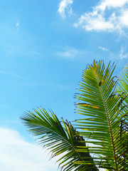 Palm trees against the blue sky, beach and sea, sunny day