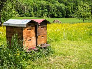Bienenhaus Imker Frühlingswiese