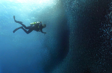 Sardine run and diver.
