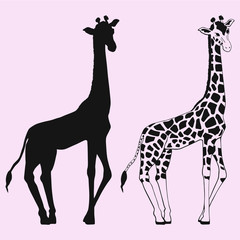 Giraffe vector silhouette isolated