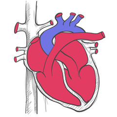 HEART BY HAND DRAWING ,VECTOR ILLUSTRATOR.