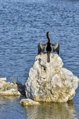 Anhinga The Devil Bird of the Everglades