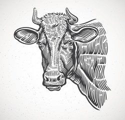 Cows head, in a graphic style.