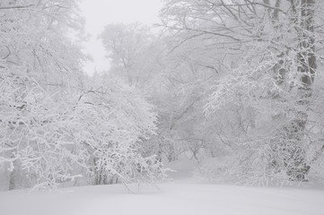 豪雪の丹沢山地