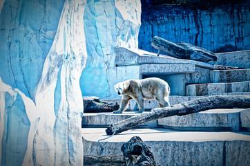 Eisbär Ursus maritimus oder Polarbär in einem Zoo mit Eis und Baumstamm in cooler blauer Optik
