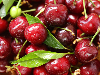 fresh ripe cherry with green leaves, macro shot