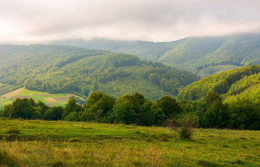 landscape with fields and  forest on hillside. lovely foggy sunrise in mountains