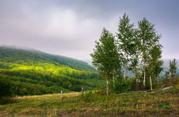 birch trees behind the fence on a hillside in autumn. lovely countryside scenery in mountains under overcast sky. beam of light drops on distant mountain