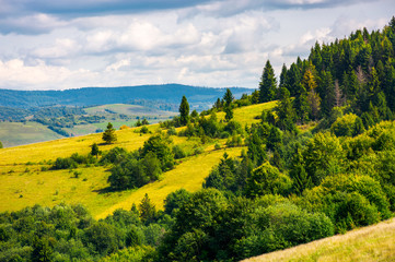 coniferous forest on a  mountain slope. lovely autumn countryside