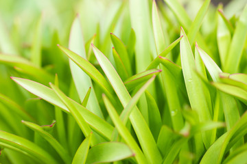 Green grass on blurred background. Close-up.