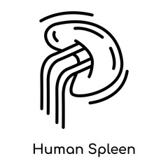 Human Spleen icon isolated on white background , black outline sign, linear modern symbol