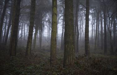 Fog in the Wood III