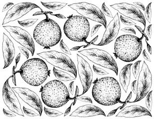 Hand Drawn Background of Borojo or Alibertia Patinoi Fruits