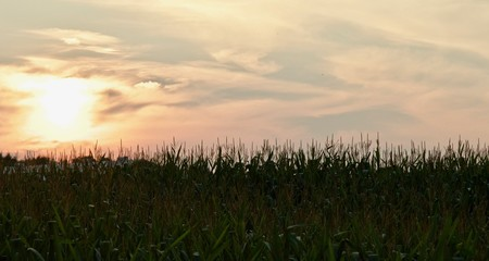 Isolated image of an amazing sunset in a field