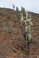 Sierra Negra Volcano, Isabella Island in Galapagos Islands, Ecua