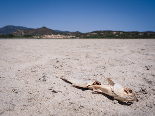 Dead fish due to the drought that has dried up a pond.