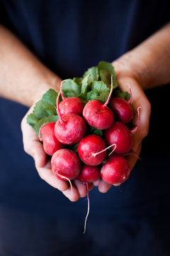 radish in the hands of a man. keep the radish