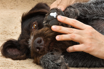 hands smearing ointment to the paw of dog