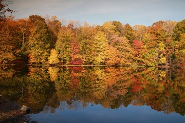 Trees with Leaves Changing Color Reflected in Calm Lake in the Morning Sun in Burke, Virginia in October