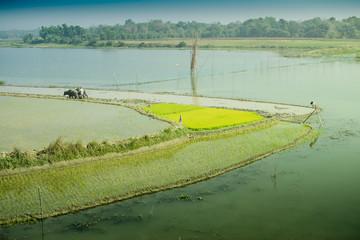 Rural landscape of India