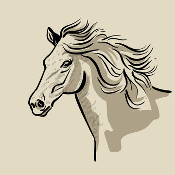 Horse head with a mane. Hand drawn vector illustration.