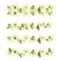 decor of light green needles larch larch watercolor with brown cones pattern isolated on white background border