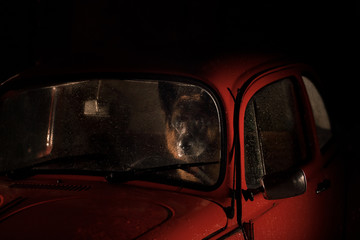 German Shepherd Dog in a retro red car at night