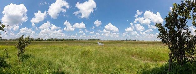 Panorama picture of landscape of the Okavango Delta in Botswana during summer period