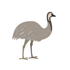 Australian bird emu on white background.
