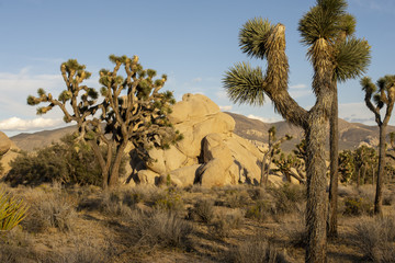 Best National Parks in America - Joshua Tree National Park