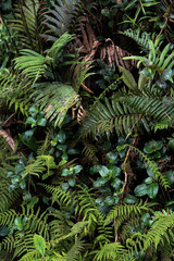 Plants at Mossy Forest. Malaysia's Cameron Highlands