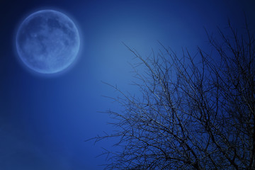 Surreal fantasy concept - full moon and tree branches in night skies backgroundץ