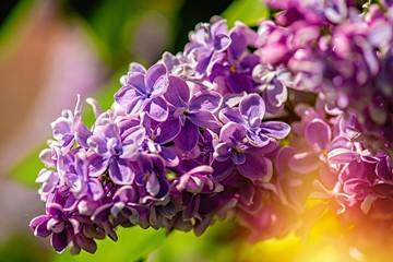 a branch of lilac against the blue sky