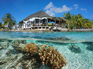 Hut on the sea shore with coral and fish underwater, split view above and below water surface, Rangiroa, Tuamotus, Pacific ocean, French Polynesia