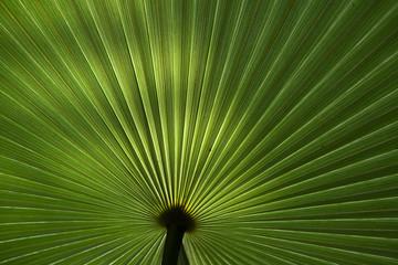 Immagine del modo vegetale