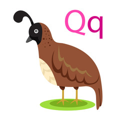 Q alphabet vector animal for kid