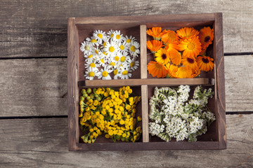 Medicinal herbs tansy daisy calendula yarrow in an old wooden box on the table