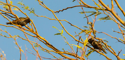 Backyard birds in Phoenix, Arizona are an eclectic bunch and perch in trees in neighborhoods