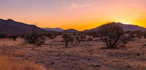 The Sonoran Desert in the southwest US is unique, open, full of various cactus, warm climate, hikers and outdoor enthusiasts explore the vast land
