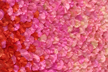 dry pink petals floral for background