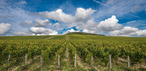The Grand Cru vineyards of Chablis, Burgundy, France