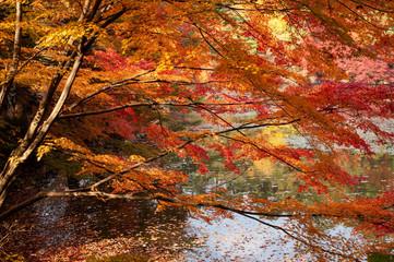 神戸森林公園の紅葉