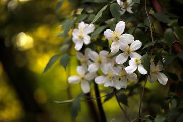 Climbing flowers in the garden