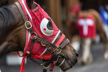 Horse in full red gear