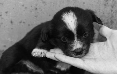Helping hand for animals. Human palm and little dirty puppy with sad eyes.