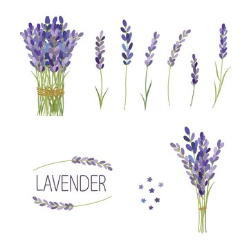 Set of lavender flowers elements. Collection of lavender flowers on a white background.
