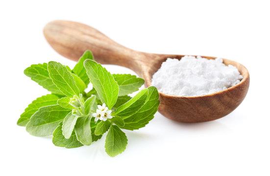 Stevia plant with powder