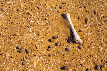 Single bone in the desert. Death in wastelands in hot day.