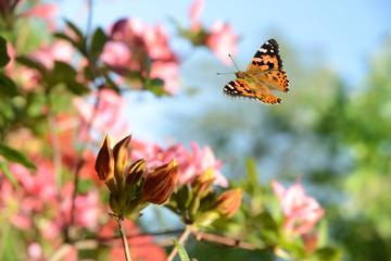 Schmetterling 484